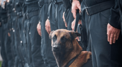 French Special Unit Dog 'Diesel' Killed by Terrorists in St-Denis raid