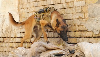 K2 Solutions and their 'dumped' military working dogs