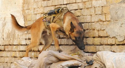 K2 Solutions and the 'dumped' military working dogs