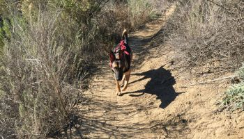 Watch: Former Navy SEAL Uses K9s for His Leadership Development and Human Performance Training