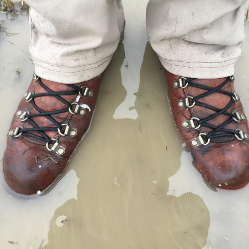 Danner Mountain Pass Light Boots