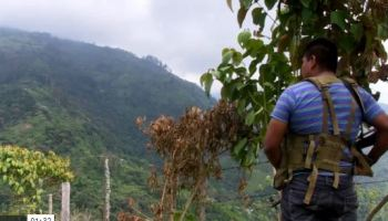 FARC Guerrillas With Few Prospects Flocking to Cali Cartels