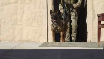USSOCOM Wants Performance-enhancing Products for its Operator Dogs
