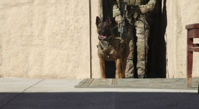USSOCOM Wants Performance-enhancing products for its Military Working Dogs