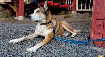 A Leash & Collar That Improves Dog Training