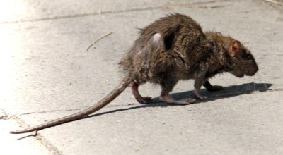 Dead rats and frogs discovered in Camp Pendleton water supply