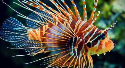 Watch Glock Fishing for the deadly Lionfish