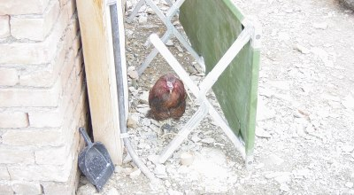 Reader Submission: Chicken AF in Afghanistan