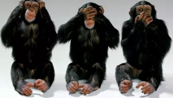 Military Leadership's Problem as Told by Three Monkeys