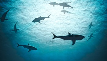 Defining Personal Success in the Special Operations Shark Tank