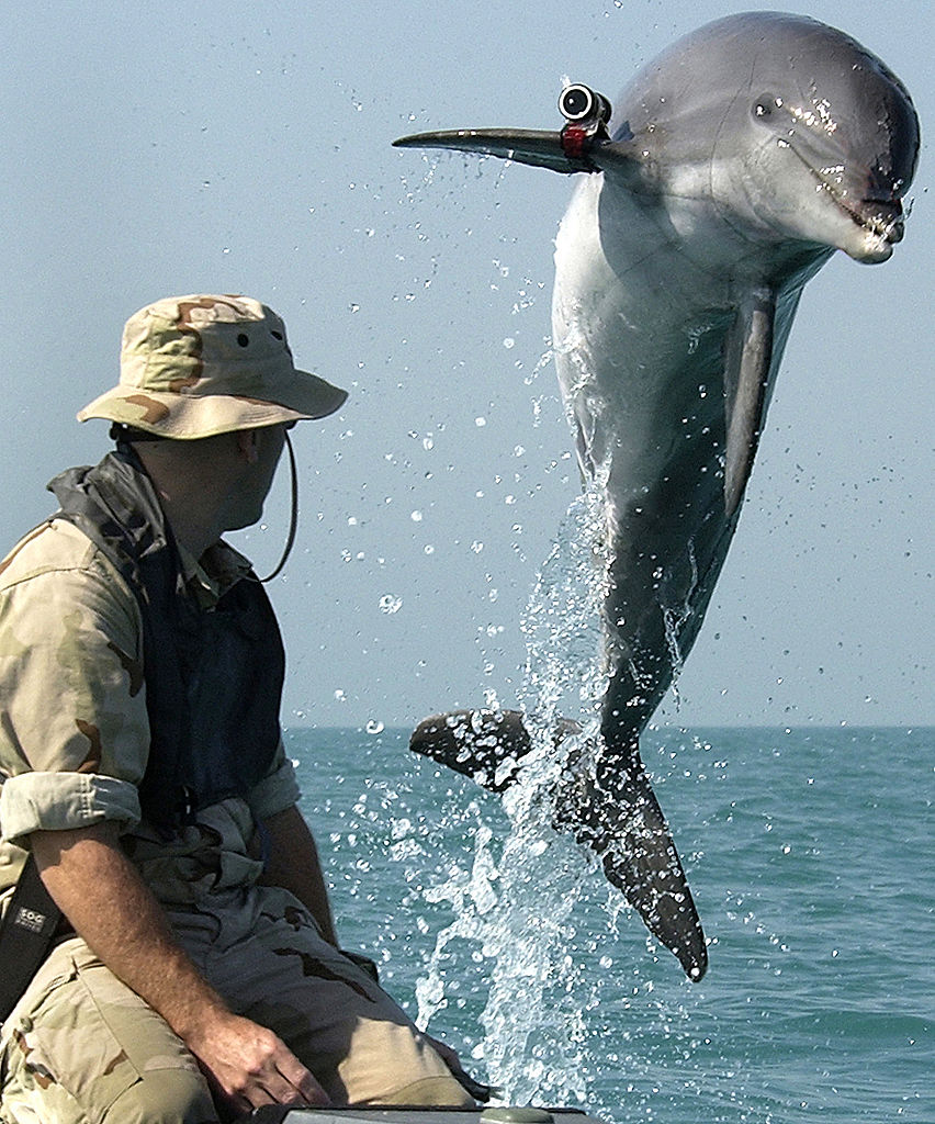 That time we took on the Navy's hunter-killer dolphins