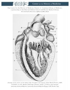 Anatomy of the arteries of the human body: descriptive and