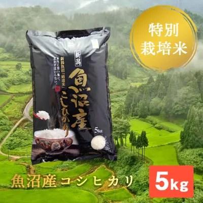 【残留農薬ゼロ】精米 5kg/(成人の方約1人分/1ヶ月)/魚沼産コシヒカリ/棚田米