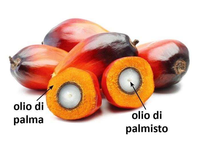 cliomakeup-olio-palma-palmisto-3