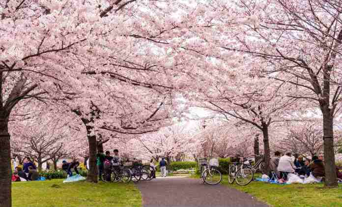 cliomakeup-viaggi-nella-natura-10-ueno-park