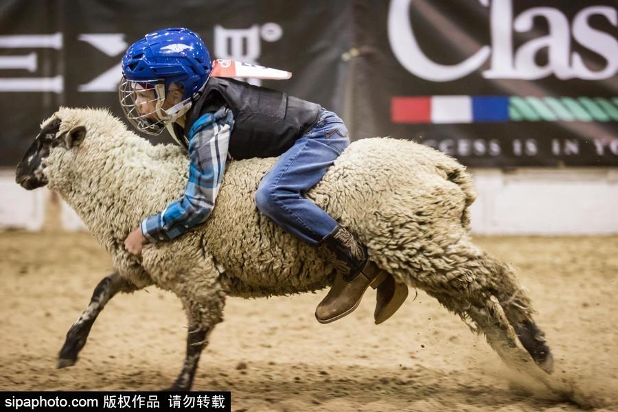 美國里諾舉行兒童騎羊大賽 萌娃上場有模有樣[1]- 中國日報網