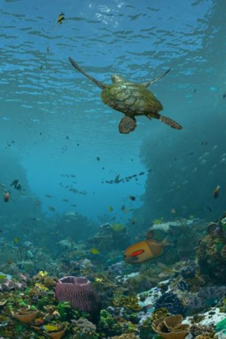 A sea turtle swims above a colorful coral reef in the California Academy of Sciences' GPU-powered 3D experience.