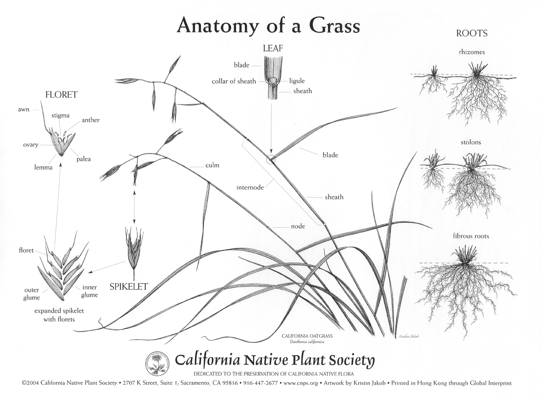 California Native Grasslands Association