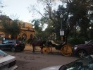 Horse carriage parallel parking