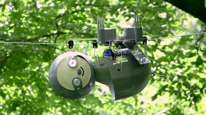 This lazy robot could protect endangered ecosystems