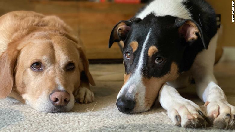 mascotas covid pandemia
