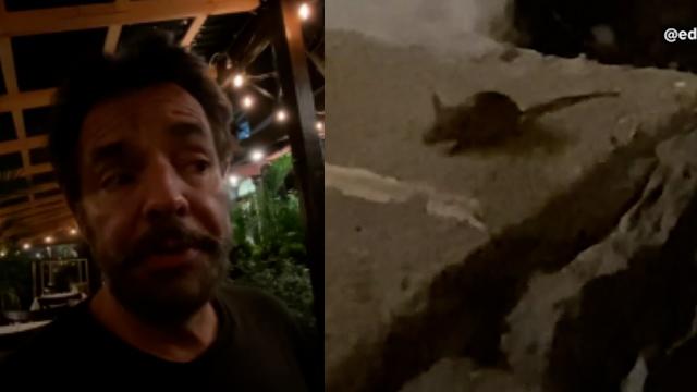 Eugenio Derbez comparte una inesperada visita a la hora de cenar