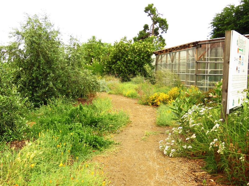 Elderberry Farms Garden. Credit Jim Wadsworth.