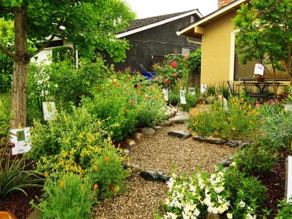 gardening - california native plant