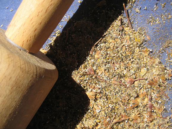 Seeds and chaff after thorough crushing with rolling pin.