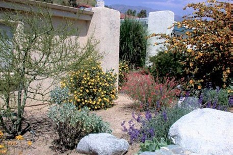 A Colorful Southern California Garden Featuring Flowering Shrubs Such As  Flannel Bush (Fremontodendron Californicum) And Island Bush Poppy  (Dendromecon ...