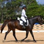 Riders warm up to winter dressage show