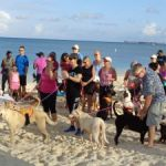 Strutters hit the beach to benefit dogs