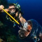TV paves way for weatherman's lionfish hunt
