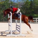 Equestrians put on final jumping show of season