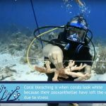CCMI offers new virtual reef lessons