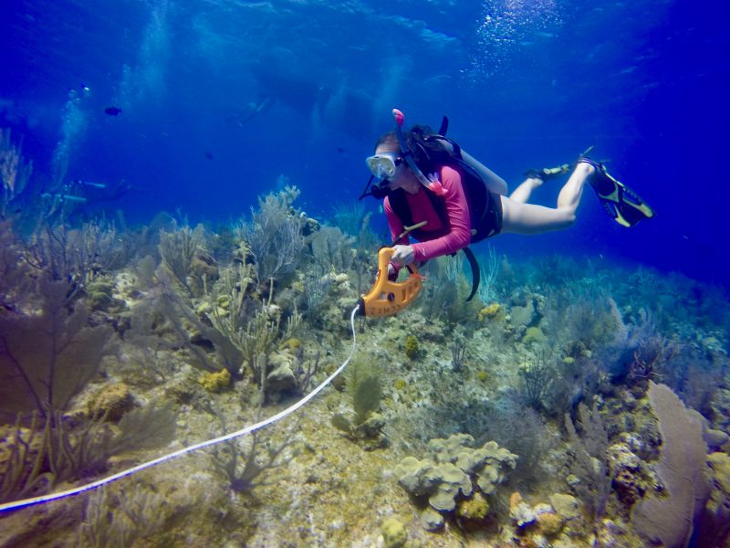 Really. All naked women scuba diving coral reef apologise