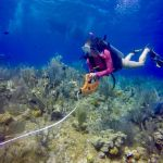 CCMI lecture looks at reef resilience