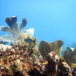 CCMI celebrates reefs for World Oceans Day