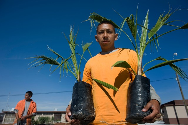 Everardo Gamboa, an inmate at the Chihuahua state prison in Ciudad Juarez, Mexico, poses for a photograph holding palm trees he will plant at the chapel in the men's section of the prison. The chapel is being remodeled for a visit by Pope Francis, scheduled for Feb.17. (CNS/David Maung)