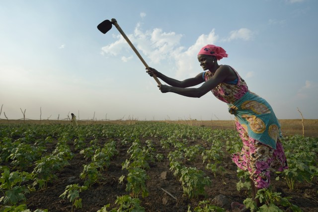 A woman works in a community vegetable garden in Dong Boma, South Sudan. Up to 20 million people in South Sudan, Yemen, Somalia and northeast Nigeria face the prospect of famine this year. (CNS/Paul Jeffrey)