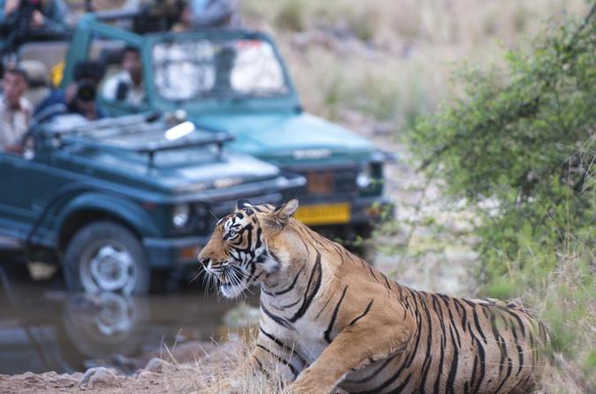 Jaipur Ranthambore National Park