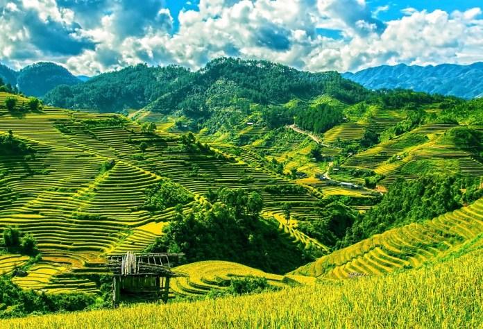 rice paddies at Bali