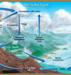 this illustration shows the sulfur cycle sulfur enters the atmosphere as sulfur dioxide so2 [ 1117 x 778 Pixel ]