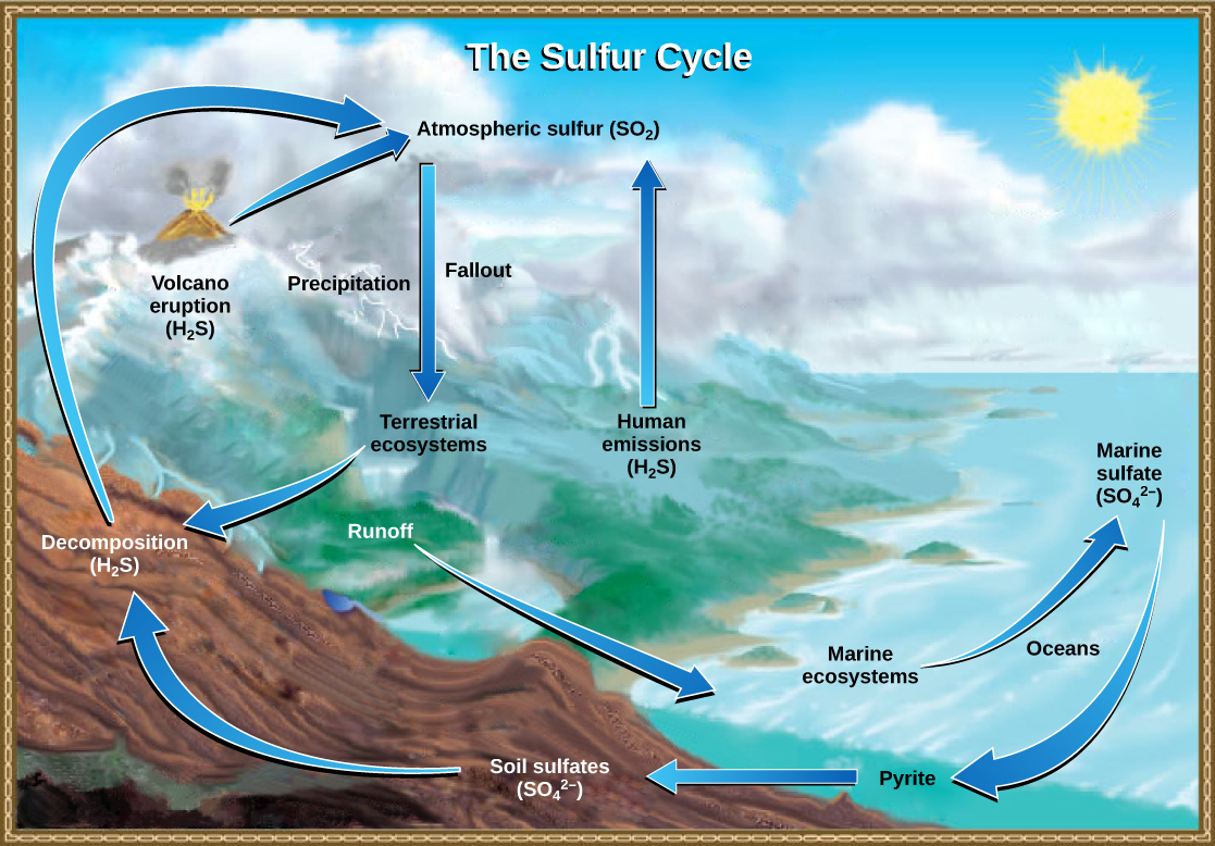 hight resolution of this illustration shows the sulfur cycle sulfur enters the atmosphere as sulfur dioxide so2