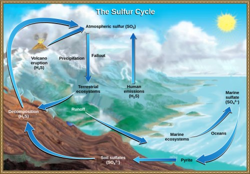 small resolution of this illustration shows the sulfur cycle sulfur enters the atmosphere as sulfur dioxide so2