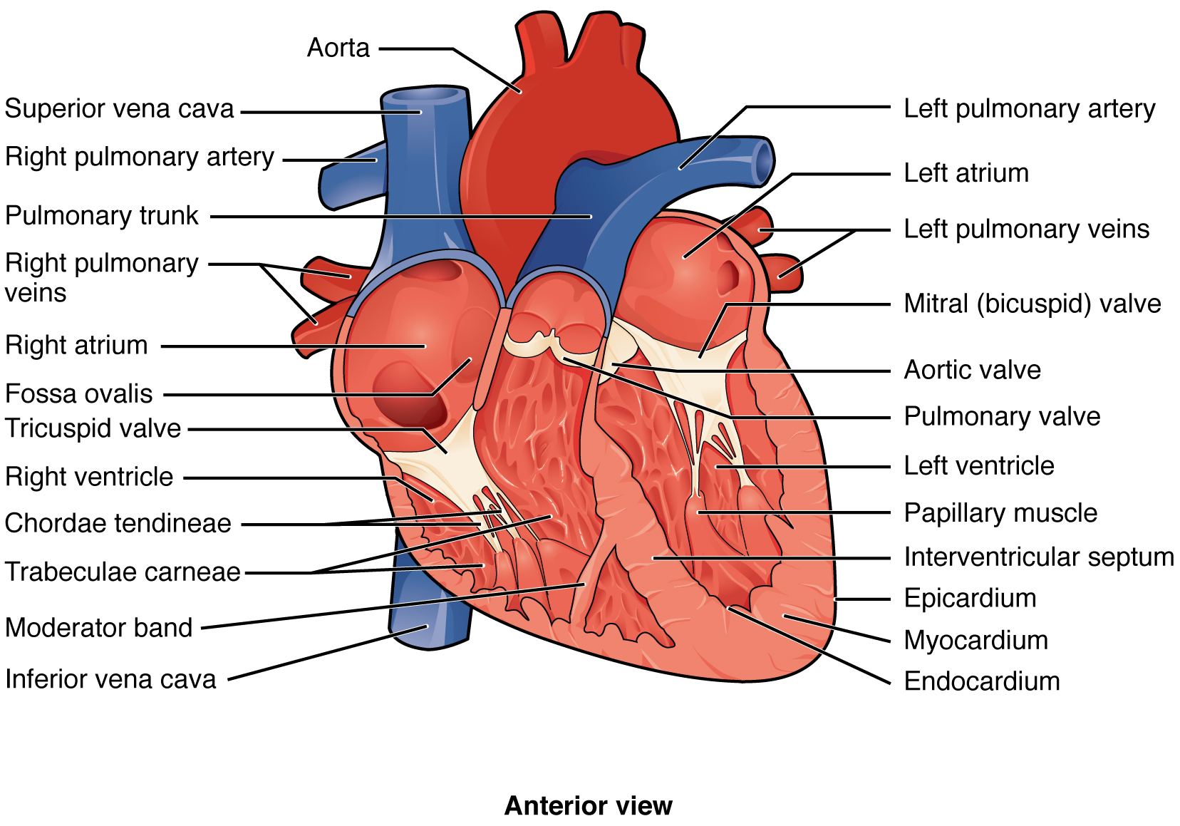 hight resolution of in this figure the top panel shows the image of the heart with the major parts