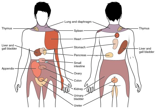 small resolution of the figure shows the different organs in the human body the left panel shows the figure 15 7 referred pain chart