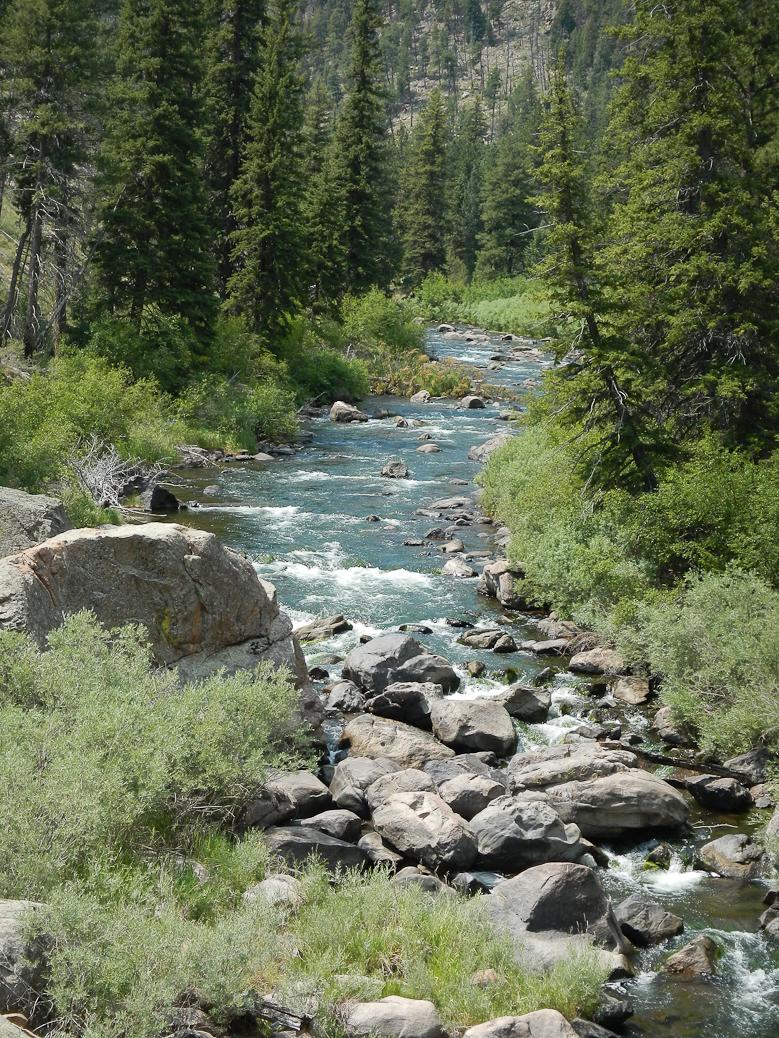 Rocky river running through a forest