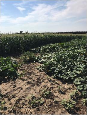 Southern Colorado producers on a soil health tour in South Dakota at Rilling Farm