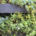 Cascading plants in Custom steel boxes bolted to wall thumbnail